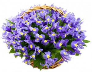 Корзина синих ирисов — Kievflower - Доставка цветов