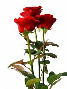 Три красных розы — Kievflower - Доставка цветов