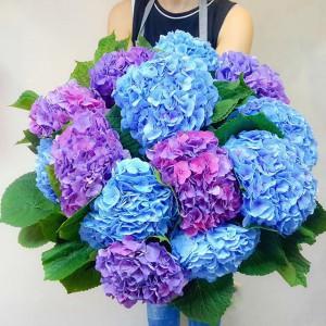 Букет Гортензий  — Kievflower - Доставка цветов