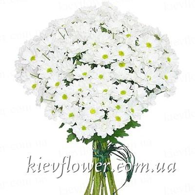 Купить цветы ромашка как заказать доставку цветов в спб