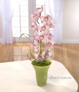 """Композиция """"Дикая орхидея"""" — Букеты цветов заказать с доставкой в KievFlower.  Артикул: 8011"""