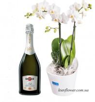 Орхидея Фаленопсис + Asti Martini
