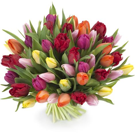 """Букет тюльпанов """"Радуга"""" - 51 шт. — Букеты цветов заказать с доставкой в KievFlower. Артикул: 0571"""