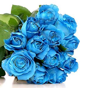 Где купить в киеве синие или голубые розы живые цветы на заказ оптом
