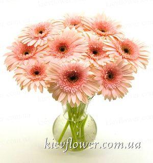 11 розовых гербер — Букеты цветов заказать с доставкой в KievFlower.  Артикул: 0535