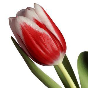 Тюльпан — Цветы поштучно заказать с доставкой в KievFlower.  Артикул: 7013