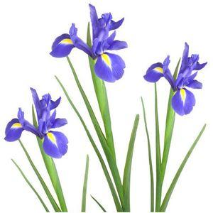 Ирис — Цветы поштучно заказать с доставкой в KievFlower.  Артикул: 7003