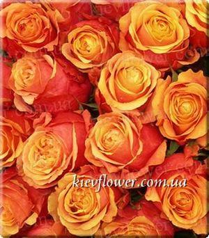 Роза Cherry Brandy — Голландские розы заказать с доставкой в KievFlower.  Артикул: 1306