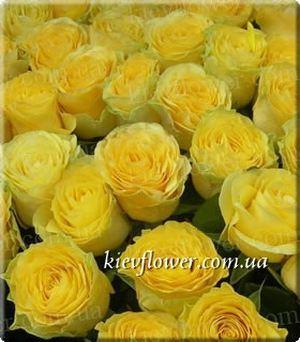 Роза Ilios — Голландские розы заказать с доставкой в KievFlower.  Артикул: 1304
