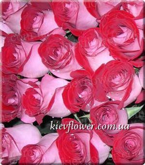 Роза Latin Lady — Голландские розы заказать с доставкой в KievFlower.  Артикул: 1312