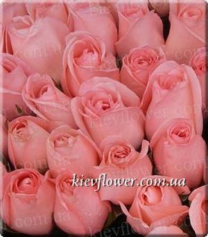 Роза Titanic — Голландские розы заказать с доставкой в KievFlower.  Артикул: 1308