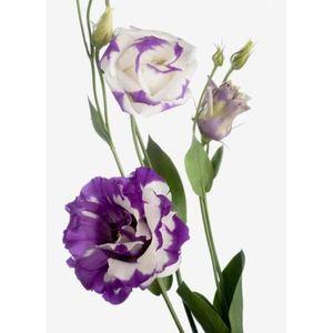 Эустома — Цветы поштучно заказать с доставкой в KievFlower.  Артикул: 7012