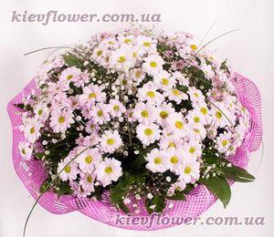 Букет из розовых хризантем — Букеты цветов заказать с доставкой в KievFlower.  Артикул: 0561