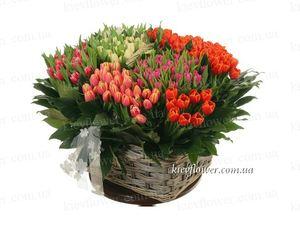 """Корзина тюльпанов """"Радуга"""" 151 шт. — Букеты цветов заказать с доставкой в KievFlower.  Артикул: 7019"""