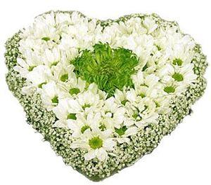 """Сердце """"Ромашковое счастье"""" — Букеты цветов заказать с доставкой в KievFlower.  Артикул: 0436"""