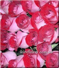 Роза Latin Lady