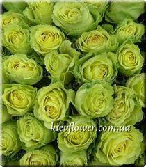 Роза Limbo