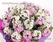 Поляна белых и розовых ромашек