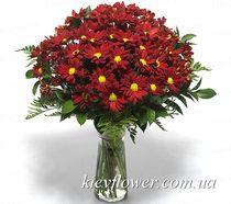 Букет бордовых хризантем