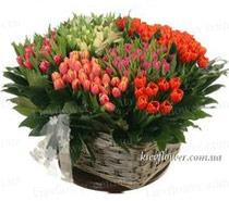 """Корзина тюльпанов """"Радуга"""" 151 шт."""