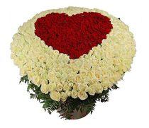 Пламенное сердце - 501 роза